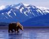 8-бальное землетрясение у побережья Аляски