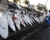 Акульи плавники: ужасающее преступление