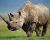 Исчезновение суматранских носорогов заставило ученых в Зоопарке Цинциннати предпринять решительные меры