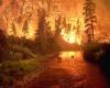 Жара: вспышка пожаров по всей Великобритании
