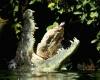 Крокодил съел 24-летнего парня