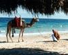 Какой самый холодный месяц в Египте?