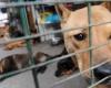В  китайском городе убиты почти 5000 собак