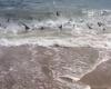 Более 100 акул выбросились на берег на пляже в США