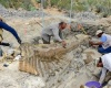 Найдено крупнейшее кладбище динозавров