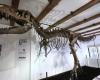 В ОАЭ продают два скелета тираннозавров за 14 млн долларов