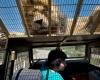 Зоопарк в Чили позволяет посетителям пощекотать живот  льва