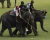 Ежегодный турнир по поло на слонах стартует в Таиланде