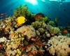 На Мальдивах пройдет IV ежегодный подводный фестиваль