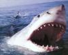Серфингист погиб в результате того, что акула перекусила ему обе ноги