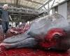 В Японии массово убивают китов