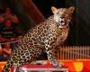 В Мексике запретили животных в цирке