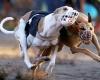 Собачьи бега в Сантьяго