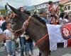 В Мексике празднуют фестиваль ослов