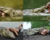 20-летняя дружба с крокодилом