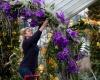 В Кью-Гардензе открылся фестиваль орхидей