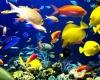 Коралловые рифы Новой Каледонии - отличное место для морского туризма