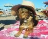 В Рамини открылся пляж для собак