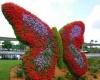 В Дубаях откроют один из самых крупных в мире Парк Бабочек