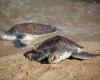 День черепахи – уникальный праздник