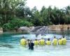 Лучшие в мире парки развлечений
