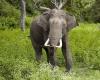 В Индии слон разрушил дом, но спас ребенка