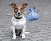В Берлине введут налог на туристов с собаками