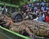 В Уганде пойман гигантский крокодил-людоед