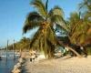 Во Флориде на пляже днем началась перестрелка