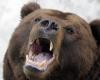 Разъяренная медведица напала на женщину