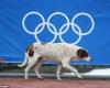 В Сочи убивают бродячих собак