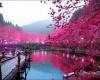 Фестиваль цветения сливы в Японии
