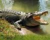 В Национальном парк Какаду в Австралии крокодил утащил под воду 12-летнего мальчика