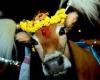Индия отмечает Понгал – праздник урожая