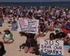 Более 4000 в Австралии выступают  против убийства акул