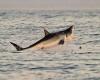 63-летнюю жительницу Австралии съела акула
