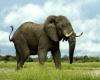 Доказано, что слоны прекрасно понимают язык жестов