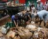 В Бразилии из-за непрекращающихся ливней погибли 41 человек