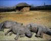 Более 100 носорогов убиты в Южной Африке за прошлый месяц