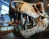 Новые виды убийц динозавров, найденные в штате Юта