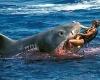 Очередная жертва акулы-людоеда