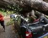 Англия: самый страшный ураган за последние 25 лет