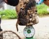 Тайцы распродают собак на мясо