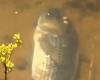 Разлитая патока в Гавайях привела к гибели тысяч рыб