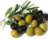 Экскурсии, посвященные сбору оливок, появились в Испании