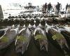 В Южной Корее не хотят потреблять радиоактивные морепродукты