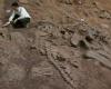 В Мексике найдены останки 72 метрового динозавра