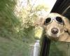 Количество туристов, желающих провести отпуск со своей собакой, увеличивается