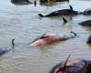 У восточного побережья США наблюдается массовая  гибель дельфинов