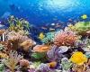 Мальдивы: купить или взять в аренду снаряжение для подводного плавания